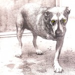 Alice in Chains: Alice in Chains (1995)